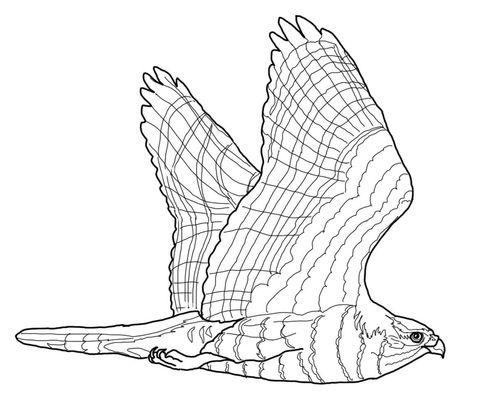 11 Best Burgess Bird Book Images On Pinterest