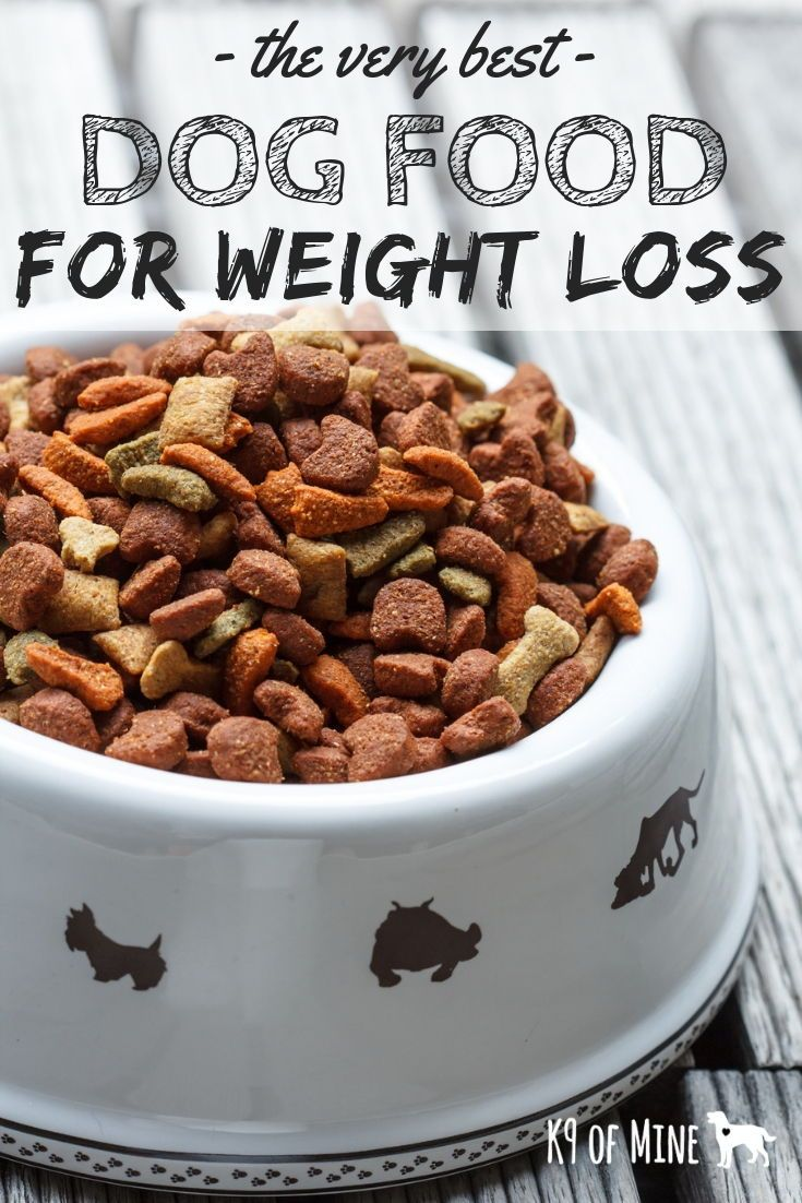 5 Best Dog Foods For Weight Loss Help Overweight Pups Shed Pounds