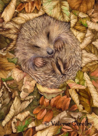 When do Hedgehogs Hibernate? – Hedgehogs are to be found in almost every part of Europe and Britain except in some areas of Scotland. The Erinaceus Europaeus is the scientific name for the British Hedgehog which belongs to the same family found in other parts of Europe known as Erinaceidae