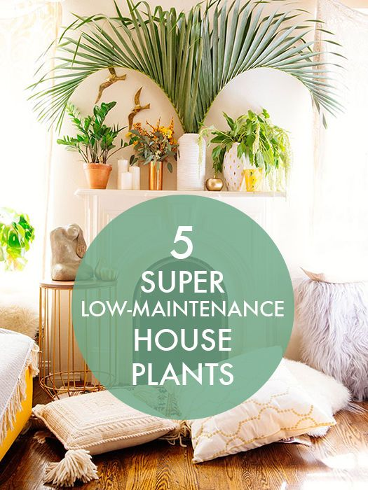 5 Super Low-Maintenance House Plants