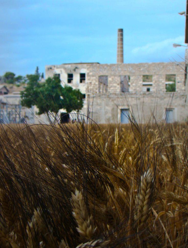 The art installation of barley.