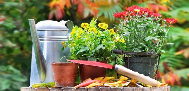 queda, outono, jardim, jardinagem, plantadores, jardinagem do recipiente, gadens, vasos de flores, vasos de plantas, vasos de jardim, vasos de jardim, cair jardim, do jardim do recipiente, recipientes de jardim, queda jardinagem, queda plantadores, jardim de outono, plantas outono