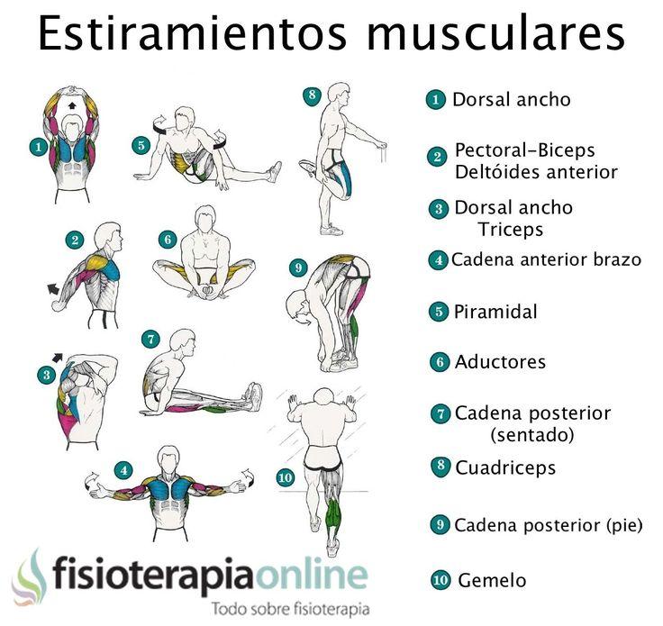 Ejercítate y estira, la mejor forma de evitar lesiones y mantenerte ágil | Fisioterapia Online