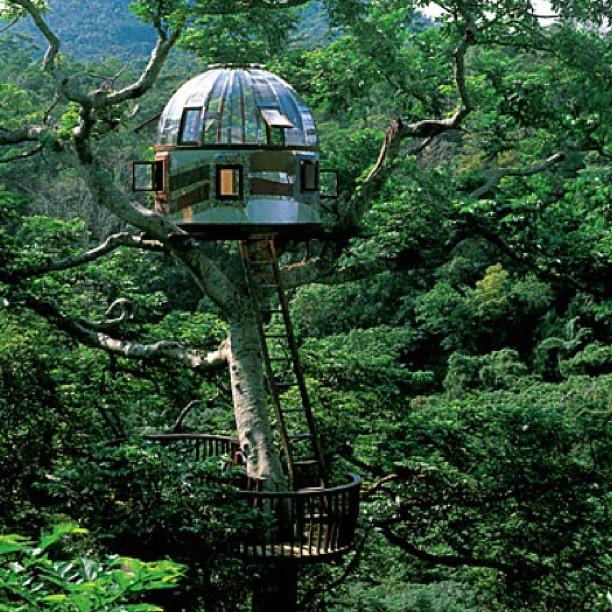@ashleyannwilliams | My future home #treehouse | Webstagram (ウェブスタグラム) - インスタグラムをパソコンで見れるサービス