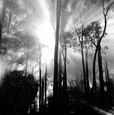Max Dupain; His ability to create a wistful yearning for the beauty seen in a certain place such as a gloomy forest or any other location using only a black and white colour palette is what I admire most about his work.  Morning in the Blue Gum Forest, 1950