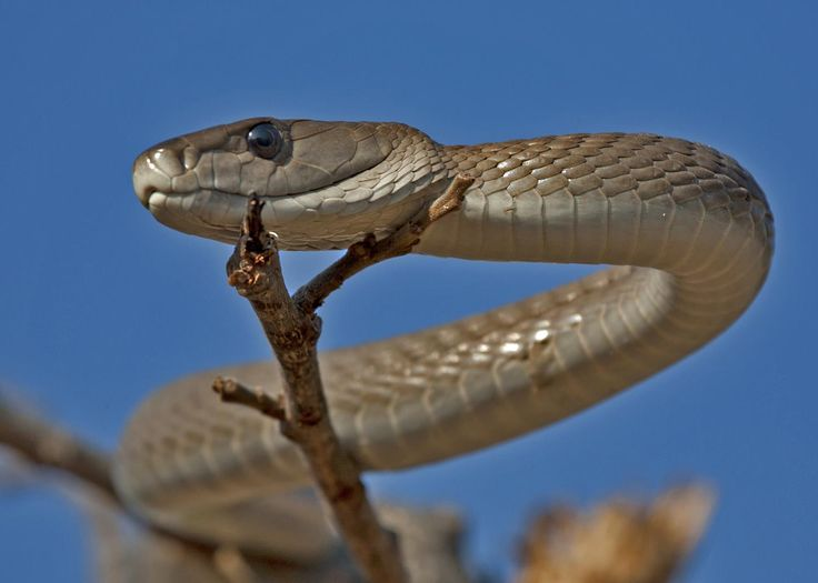 Watch out for the deadly snakes and scorpions of southern Africa