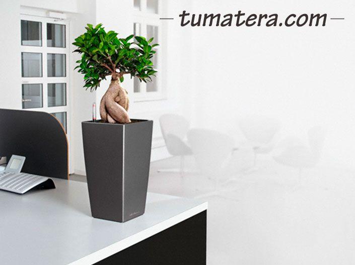 Diseño contemporáneo que le da una belleza única y carácter distinto, adaptado a cualquier estilo de tendencia actual.  Encuentralas en: http://www.tumatera.co/products/matera-inteligente-14-mi-222241cubico/