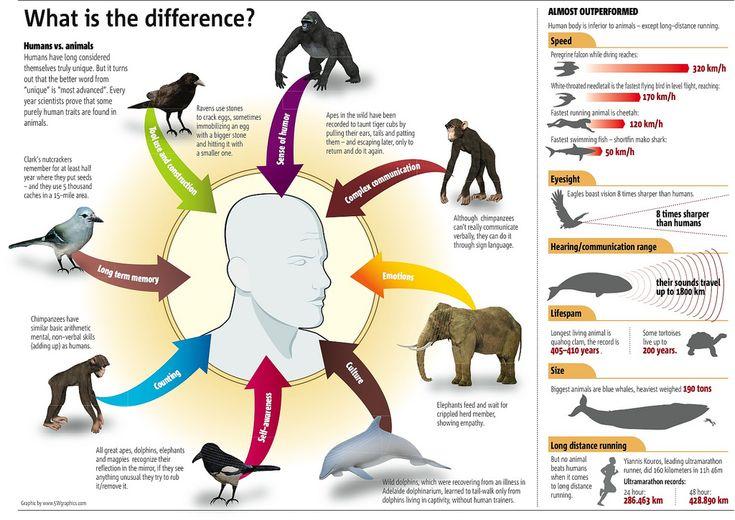 Humans vs Animals #infographicData Visual, Animal Instinct, Animal Facts, Animal Science, Interesting Infographic, Infographics, Info Graphics, Human, Animal Infographic