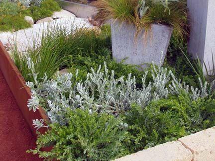 Silver & green foliage