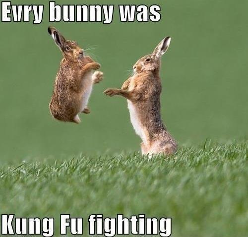 evry bunny has ... Kung fu fighting. lol