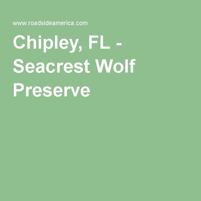 Visit Reports News Maps Directions And Info On Seacrest Wolf Preserve In Chipley Florida