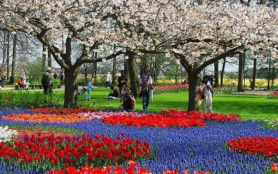 Located in Lisse, 22 miles from Amsterdam, Keukenhof is one of the top 10 flower gardens in the world worth visiting.