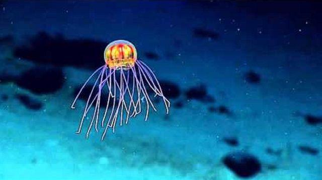 Okyanusların En Derin Noktasında 'Uzaylı' Denizanası