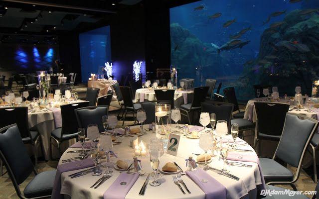 Wedding Venues In South Jersey adventure aquarium camden nj