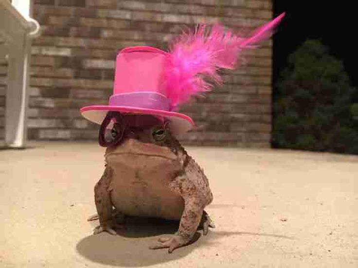 Guy Makes Tiny Hats For The Toad Who Hangs Out On His Porch