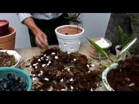 Tierra para las orqu deas parte 2 youtube jard n y for Tierra para jardin
