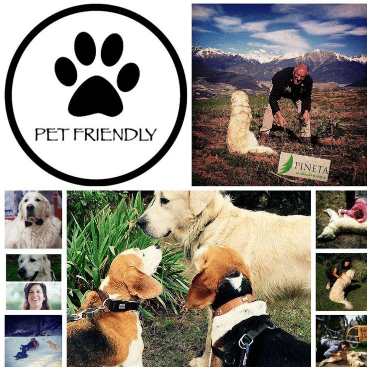 Pet Friends – Social Media by nicola.sicher – Canva