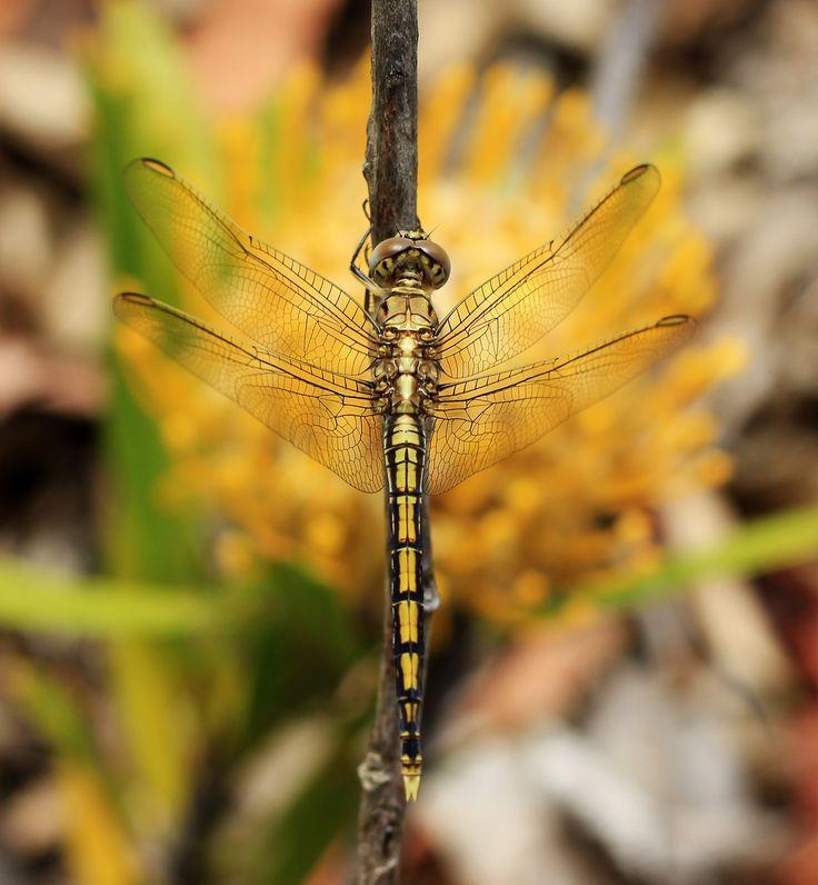 Nature and macro photos - by missflooflaa.tumblr.com photography