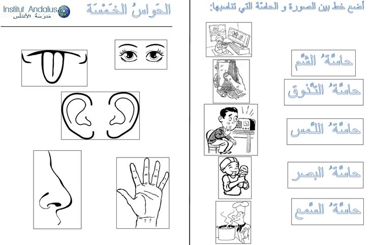The five senses in Arabic . lesson+exercises P1/4
