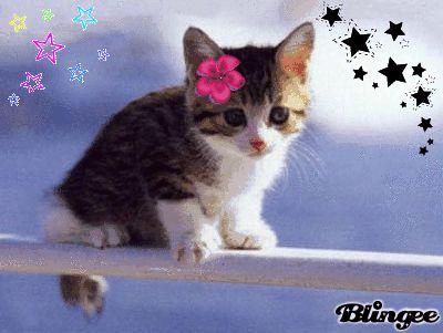 dolci gattini - Cerca con Google
