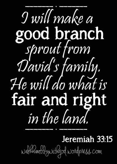 Advent, Day 4, Jeremiah 33:14-16 A Good Branch