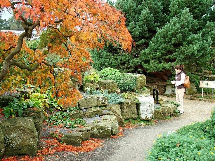 Japanese maple rock garden rock garden pinterest for Rocks for japanese gardens