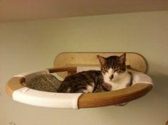 Verwöhnen Sie Ihre Hauskatze mit einem kuschelweichen Katzen-Bett