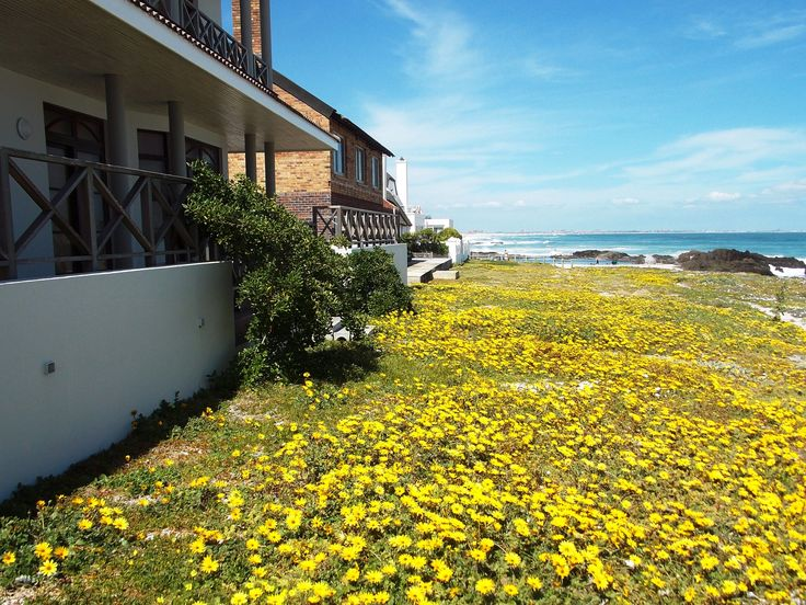 Spring Bloubergstrand Cape Town