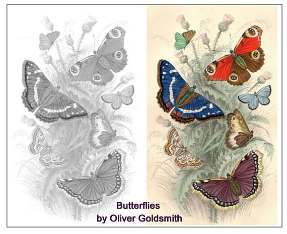 BUTTERFLIES Oliver Goldsmith Colouring Page JPEG & Two PDF