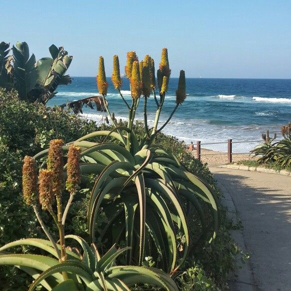 Umhlanga Beauty