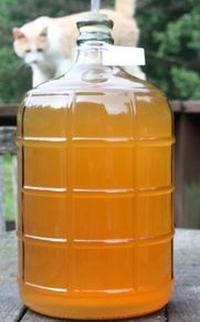 Homemade apple wine, made the old fashioned way. Fixing cloudy wine