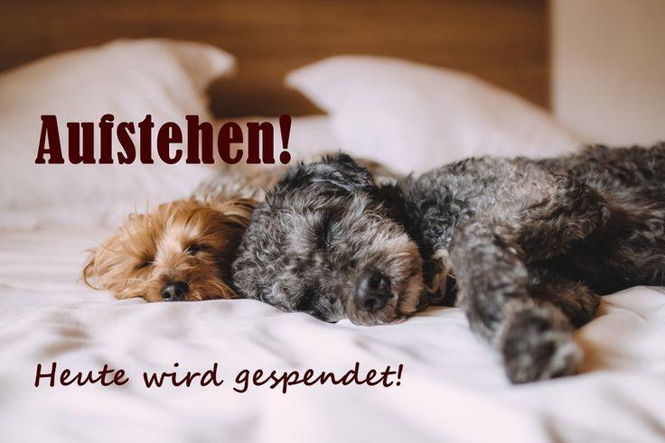 Wir spenden (heute)- An den Deutschen Tierschutzbund