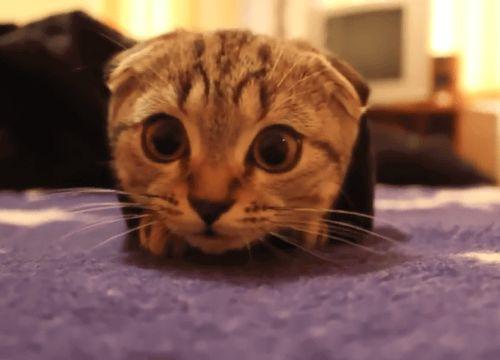 Vous rêvez d'adopter un chaton trop mignon ou un gros matou ronronnant ? Changer une litière et vous balader avec des vêtements couverts de poils ne vous pose aucun problème ?Réfléchissez bien avant de céder à la tentation. Car ne ...
