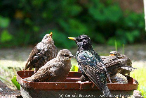 Hvězdné - vlastnosti, pozorování ptáků, obrázky