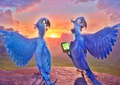 Juegos-Rio.com - Juego: Rompecabezas GPS de Blu - Puzzles de Rio Online Juegos Gratis Online