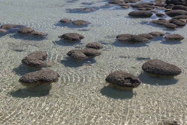 Estromatolitos | Geofrik's Blog