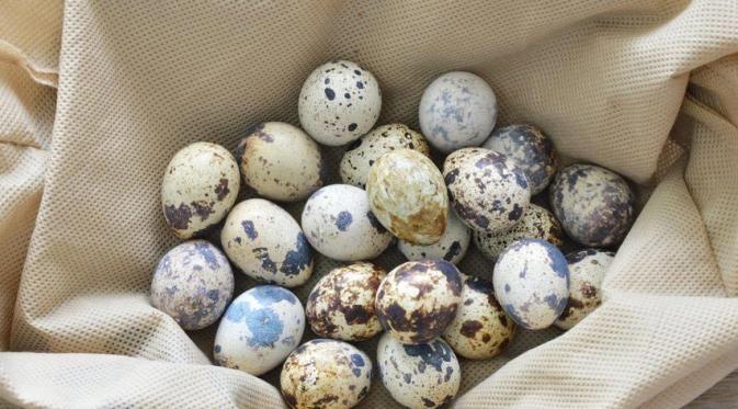 Beberapa orang berpendapat bahwa telur puyuh memiliki kadar kolesterol yang lebih tinggi dari telur ayam. Beberapa lainnya berkata sebaliknya. Mana yang benar?