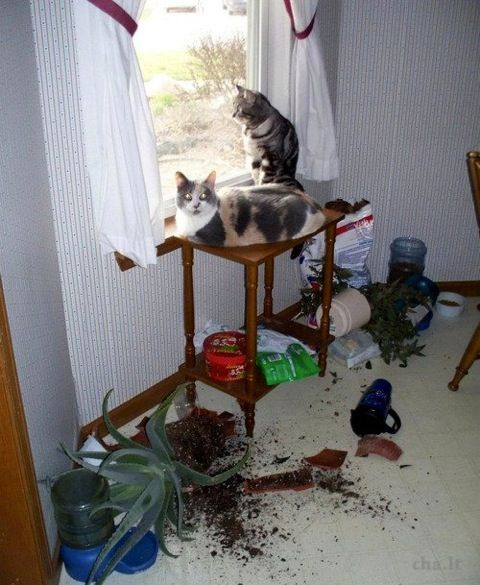 Cat Plants: Funny Things, Funny Cat, Pet, Funny Stuff, So True, Crazy Cat, Funny Animal, House, Cat Lady