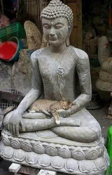 Gato en Meditacion Profunda