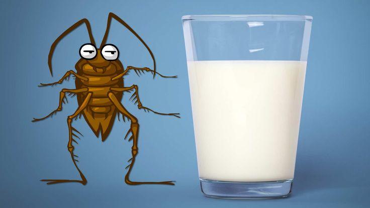 Να το πιείτε εσείς, αλήτες, το εργαστηριακό γάλα κατσαρίδας!