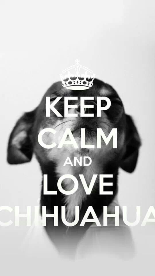 Love chihuahuas! Love Your Dog? Visit our website NOW! #chihuahua #t #shirt www.sunfrog.com/...