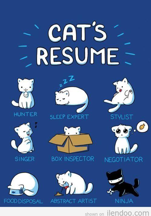 Funny Kitten Cartoons: Cat's Resume