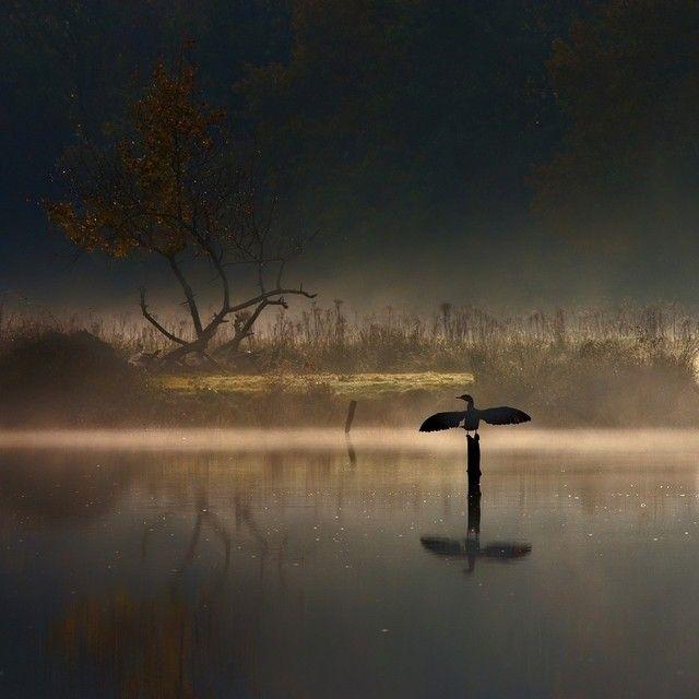 Wow! Wat een sprookjesachtig landschap vastgelegd door Anton van Dongen #Natuurmonumenten