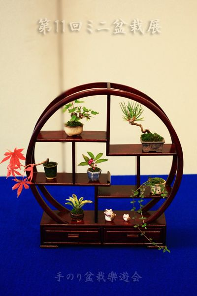 To 11th mini bonsai Bonsai Exhibition hand glue 樂遊 Association |.. Bonsai pretend Sometimes ... camera.