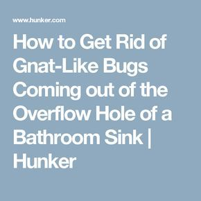 How To Get Rid Of Gnat Like Bugs Coming Out Of The