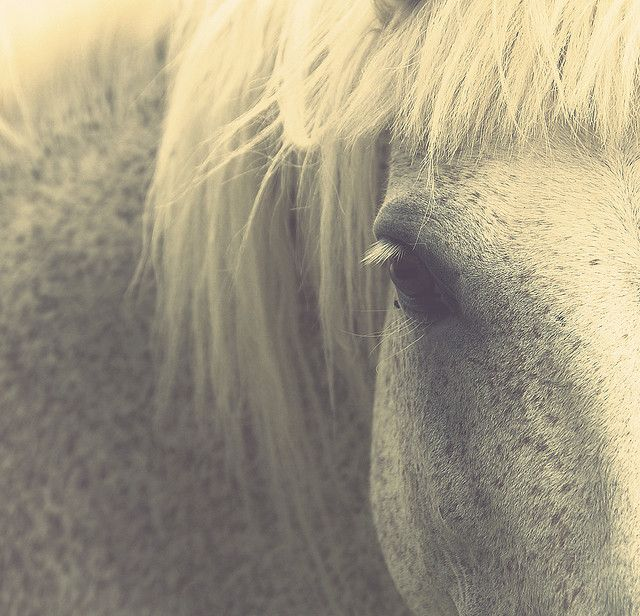 horse: Out Heart, Tribal Hors, Animal Collection, Hors Wild Animal, Grey Hors, White Hors, Hors Baby Dogs, Hors Photos, Horses Photos