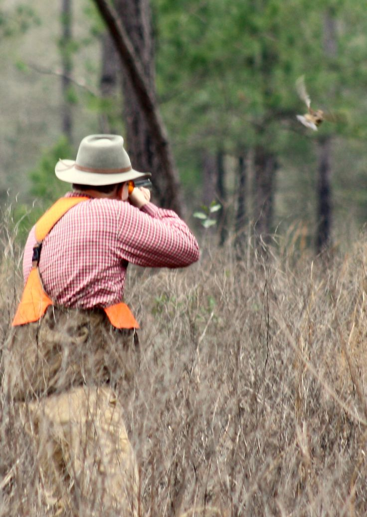 The thrill of the hunt | Quail hunting | The great outdoors