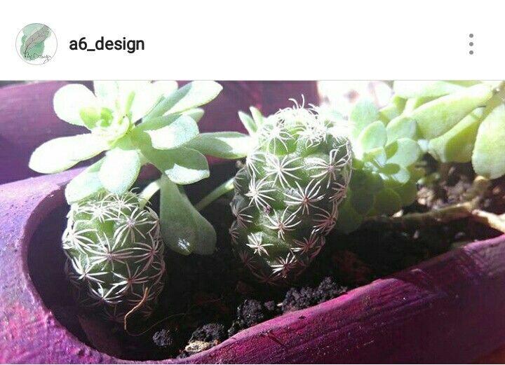 Terrario con cactus y suculentas