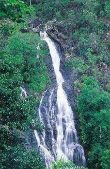 Kondalilla Falls plummets 90m into the gorge below. Photo: Queensland Government.