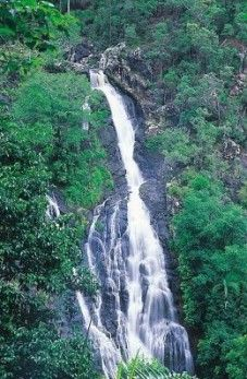 Kondalilla Falls plummets 90 m into the gorge below. Photo: Queensland Government.